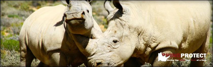 Rhino Horn Myths