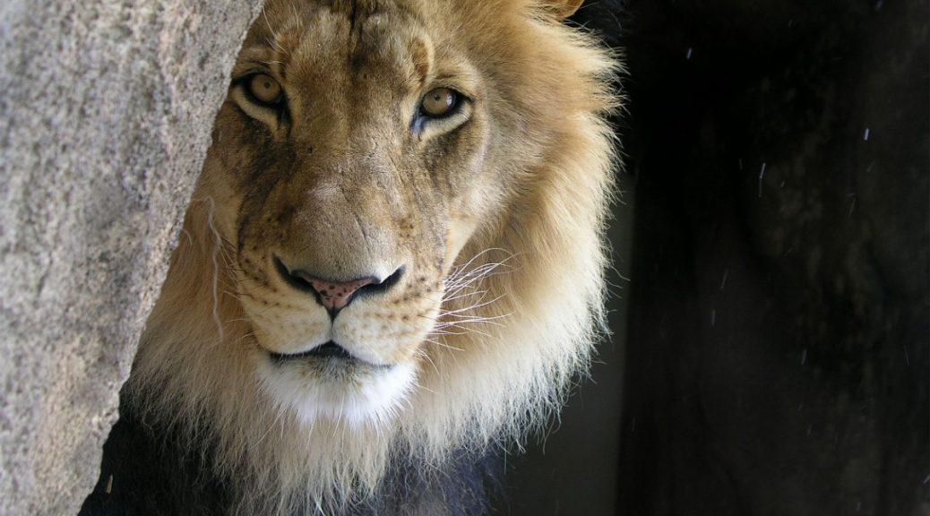 beneath the lions gaze review